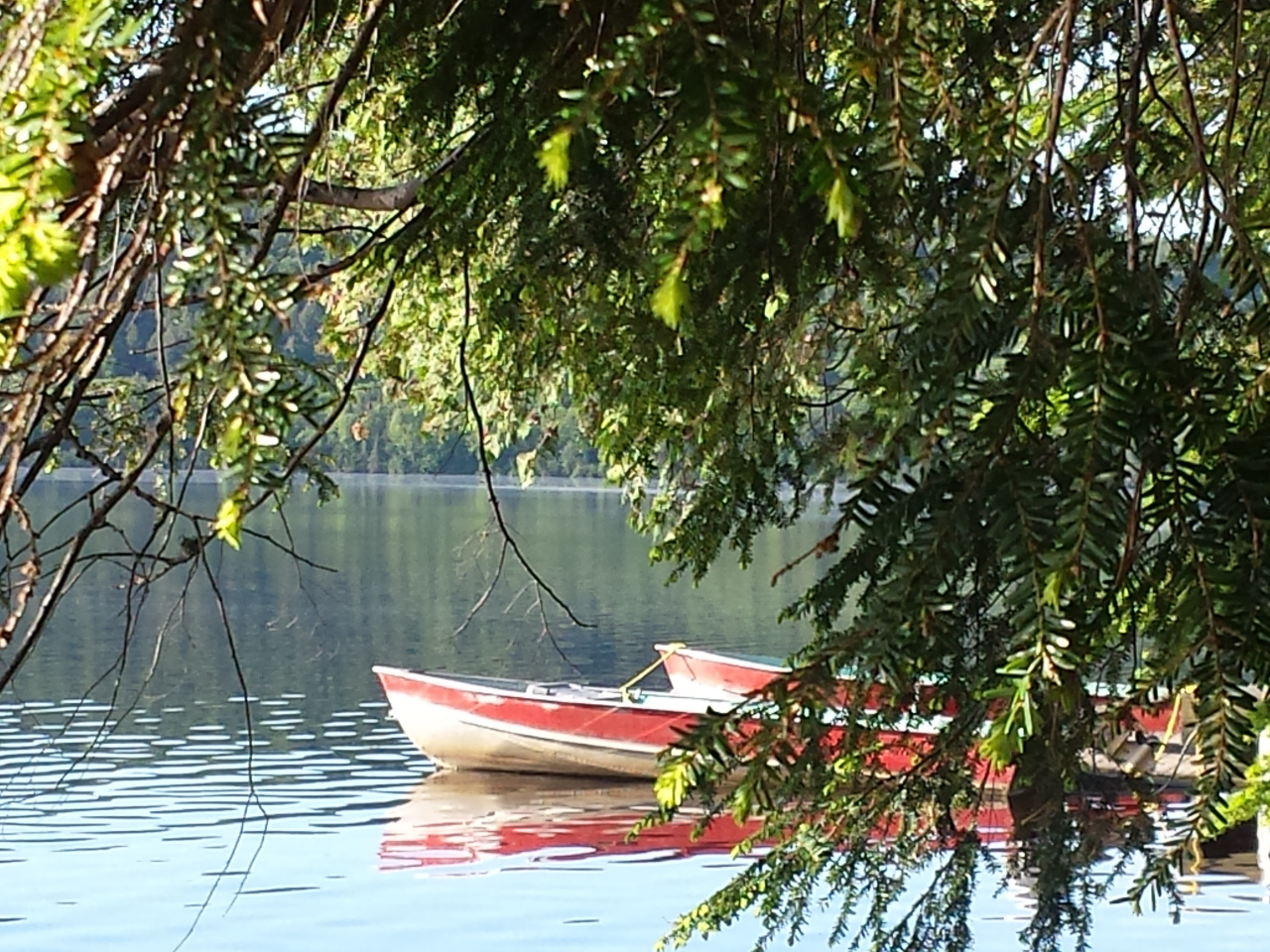 Algonquin Park - Canoe