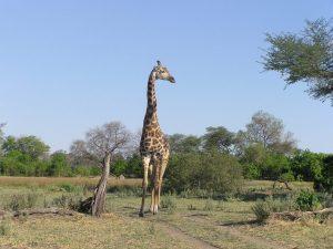 Africa-067-2-1024x767