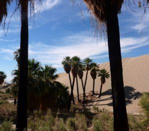 Palm-Springs-1024x899
