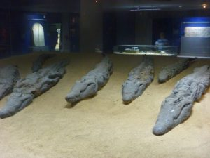 crocodile-mummies
